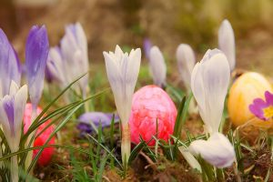 easter-674220_960_720
